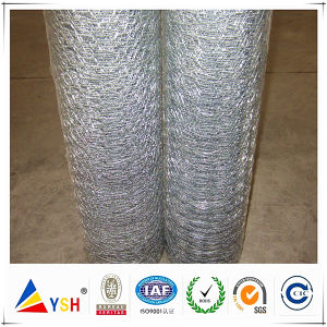 Factory of Chicken Mesh (ISO9001: 2008quality)