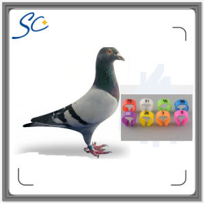 Colorful Clip Plastic Pigeon Ring with Number 1~100