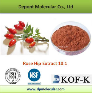 Rose Hip Extract, Rosa Canina, Extract Ratio10: 1 pictures & photos