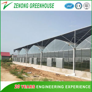 Vegetable Planting/Garden/Poultry Used High Quality Film Greenhouses