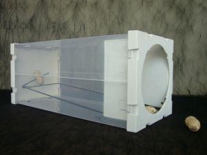 china patented easy diy set up humane plastic bottle type rat mouse