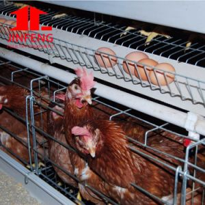 Seim Automatic a Type Chicken Cage for Broiler Layer Pullet pictures & photos