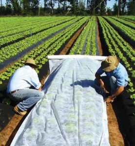 Plant Frost Protection Blanket Garden Fabric pictures & photos