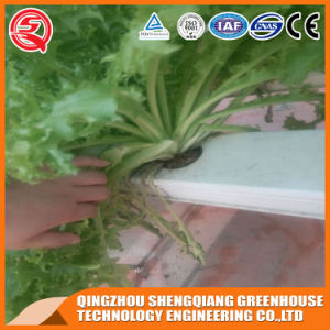 Agriculture Multi Span Hydroponics Polycarbonate Sheet Green House for Vegetable Growing pictures & photos