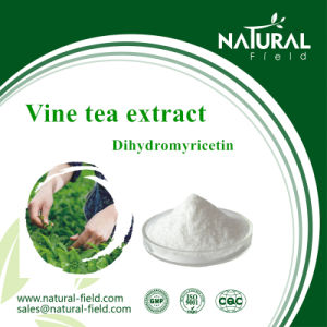 100% Natural Plant Extract Vine Tea Extract 98% Purity Dihydromyricetin