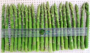 IQF Frozen Chinese Green Asparagus Spears