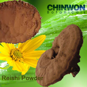 Powdered Reishi Spore Ganoderma Lucidum