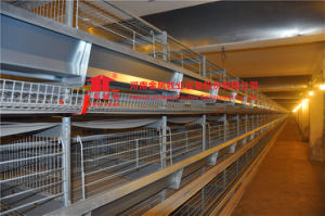 Jinfeng Design Automatic Chicken Cage for Sale in Indian Farm pictures & photos