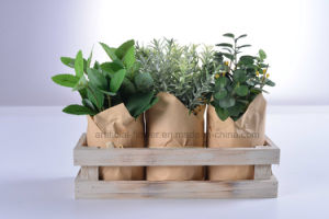 Indoor Decorations Green Plants with Gunny/Paper Packaging Wooden Potting