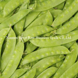 Quality Guarantee Natural Individual Quick Frozen Green Pea Pods for Cooking