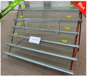 Hot Sales Birde Cage for 500 PCS
