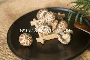 Yongxing Food Autumn Plant Brands Tea Flower Mushroom pictures & photos