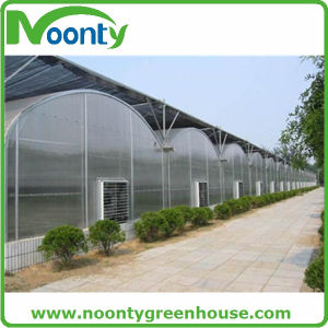 Free From Pests and Cold Durable Greenhouses