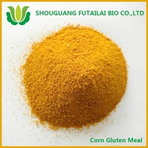 Corn Gluten Meal for Animal Feed (Manufacturer)