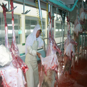 125sheeps Per Shift Slaughterhouse Equipment and Meat Processing Line