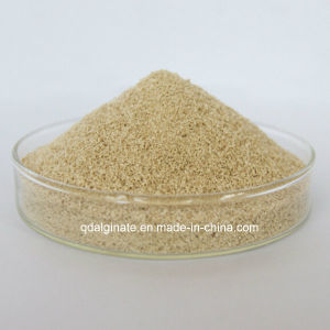 Sodium Alginate Printing Thickener