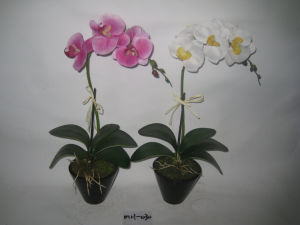 2012 New Style Single Stems Orchid Artificial with Black Ceramics Pot Mh-030
