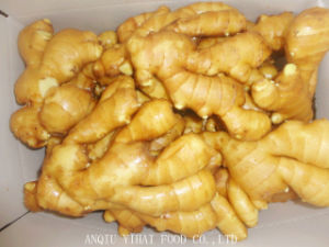 Good Quality Fresh Ginger in Anqiu China