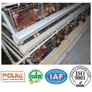 Poultry Farm Equipment or Chicken Cages System pictures & photos