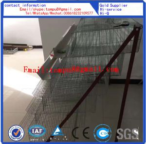 Quail Laying Cage for Sale (A Type & H Type) pictures & photos