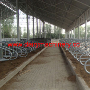 Galvanized Steel Pipe Cow Free Stall for Cow Farm pictures & photos