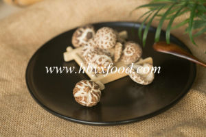 Healthy Food 3-4cm Thin Tea Flower Mushroom pictures & photos