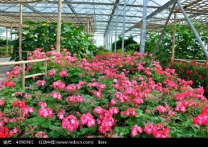 RS--Pullplastc with SGS Certificate for Greenhouse (flowers)