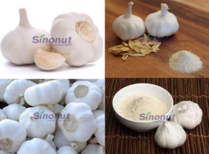 Pure White Garlic with Size 45mm, 50mm, 60mm pictures & photos
