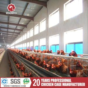 15000 Farm Scale Poultry Chicken Birds Cage Equipment in Zambia Farm pictures & photos