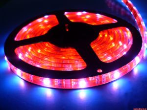 Factory Hot Sales DC24V 5050 6000k White Flexible LED Strip Light 3 Years Warranty with CE and RoHS pictures & photos