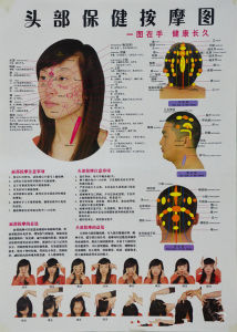 Acupressure Quick Study Academic Outline Head and Torso Laminated Chart