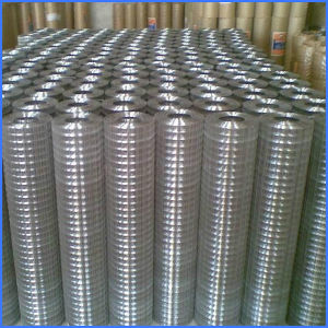 Low Carbon Steel Welded Wire Mesh Electrowelding Net pictures & photos