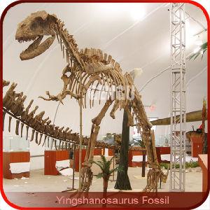 China Fiberglass Dinosaur Skeleton, Fiberglass Dinosaur