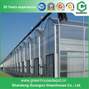 Hot Sale Complete Hydroponics Plastic Film Greenhouse on Sale pictures & photos