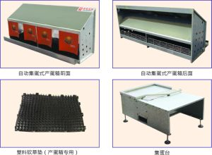 Poultry House Equipment Egg Collecting System