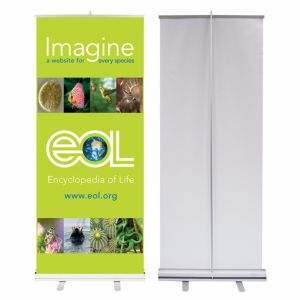 Scrolling Roll up Banner for Advertising 85*200/80*200cm (B-NF22M01009)