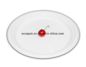 Wholesale Eco Plate