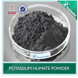 Factory Supply 100% Natural Brown Seaweed Extract pictures & photos