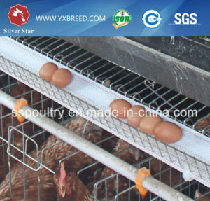 Livestock Layer Cages with Exhaust Fan for Big Farm pictures & photos