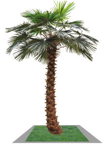 Artificial Palm Tree with Factory Price