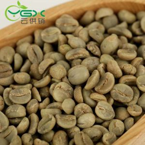 China 2019 Harvest Grade A Arabica Green Coffee Beans China