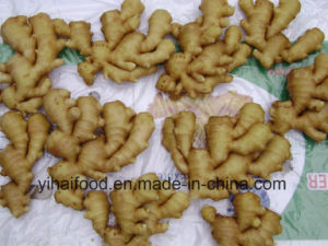 Anqiu Good Fresh Ginger