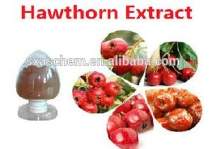 Free Sample Hawthorn Extract Powder in Bulk/2% Vitexin Hawthorn Leaf Extract /