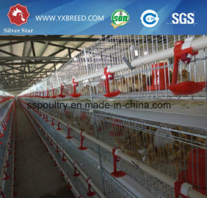 Automatic Poultry Farming Equipment / Broiler Rearing Cage / Chicken Cage pictures & photos