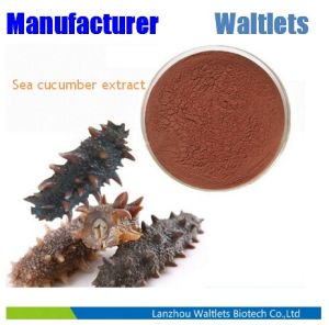 High Quality Pure Sea Cucumber Extract Powder