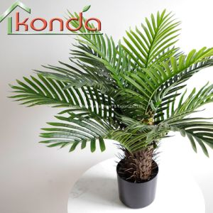 Hot Sale with Plastic Pot Home and Shop Decoration Small Palm Tree Plants