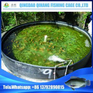 HDPE Plastic Fish Farm Tank, Plastic Tanks for Fish Farming