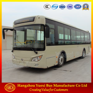 Hot Sale 8 - 10 Meter City Bus (6105)