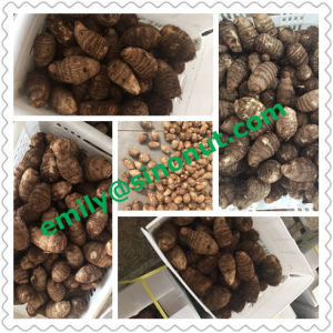 New Fresh Taro EU Quality pictures & photos