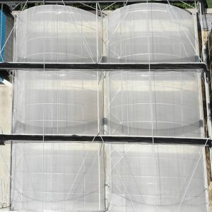 Greenhouse for Vegetable